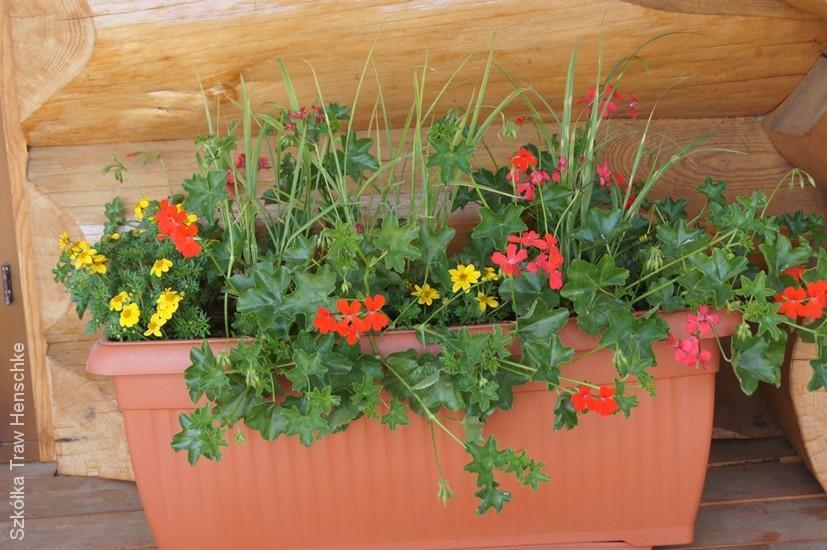 Szkółka Traw Henschke - trawy na balkony i tarasy
